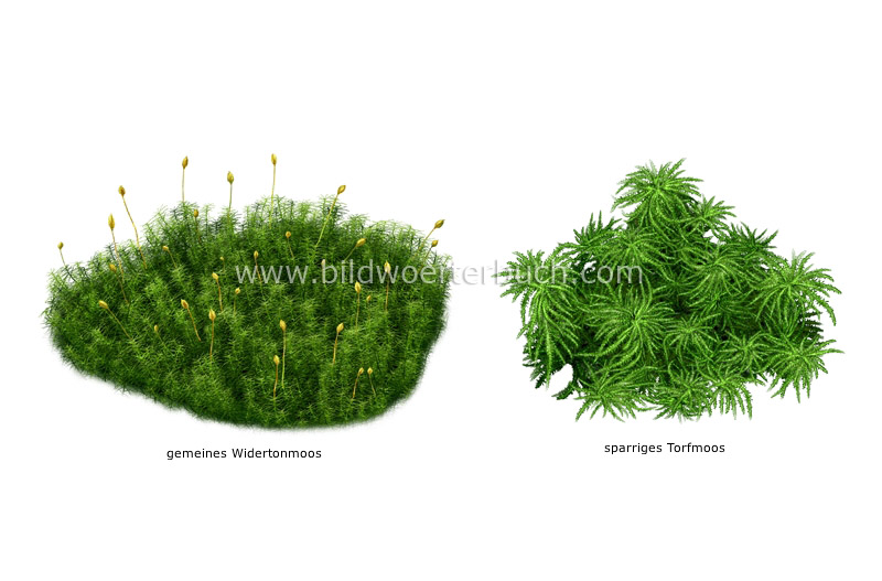 examples of mosses image
